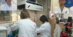"Gruppo di ricerca ""Viruses"", Università di Sassari"