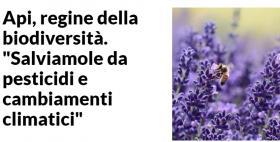 Api, regine della biodiversità_Repubblica.it