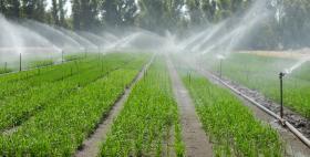 Tecnica di coltivazione del riso per aspersione