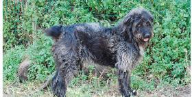 Un esemplare di cane fonnese