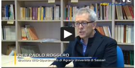 Pierpaolo Roggero, Nrd Uniss_Videolina, Figli d'Europa
