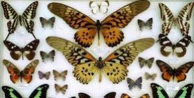 farfalle museo scientifico Muniss
