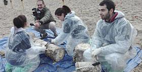 Studenti al lavoro per il recupero della balena spiaggiata