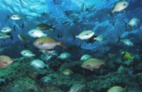 ecologia marina