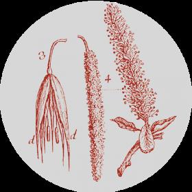 Collezione di Botanica Farmaceutica